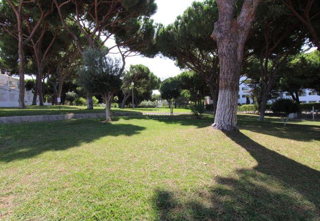 in Albufeira - Apartment Açoteias - D´Alma Pine Tree